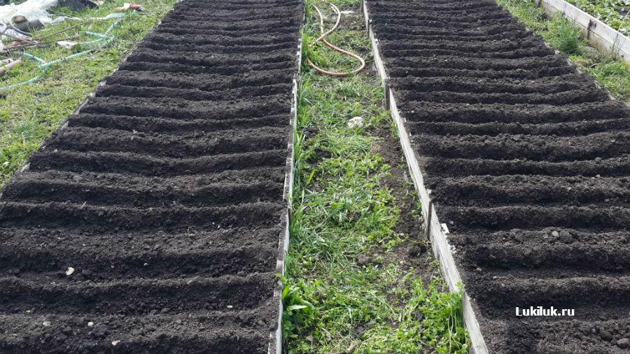 Готовые бороздки для посадки севка