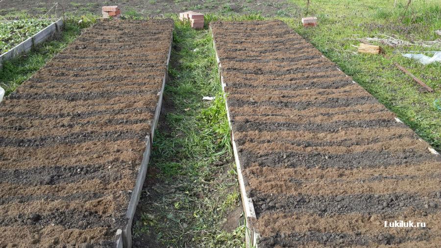 Технология посадки севка